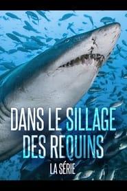 Dans Le Sillage Des Requins - La Vie Secrète
