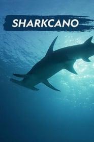 Sharkcano 2020