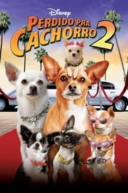 Chihuahuan från Beverly Hills 2