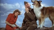 Le Fils de Lassie en streaming