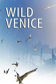 Wild Venice 2014