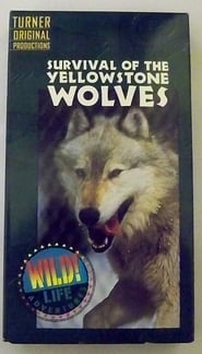 Survival of the Yellowstone Wolves 1996
