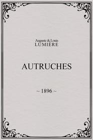 Autruches 1896