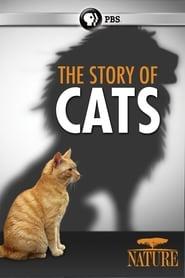 The Story of Cats (2016) Online Lektor PL CDA Zalukaj