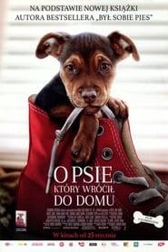 O psie, który wrócił do domu / A Dog's Way Home (2019)
