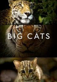 Poster Big Cats 2018
