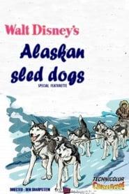 Alaskan Sled Dog 1957