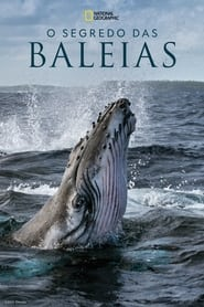 O Segredo das Baleias: Season 1