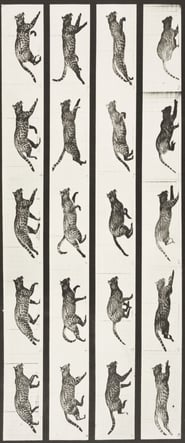 Cat Trotting, Changing to a Gallop 1887