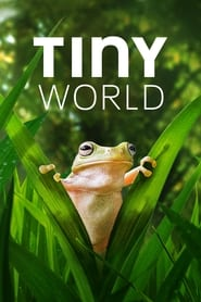 Tiny World - Season 2 (2021) poster