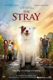 Imagen The Stray (2017) Bluray HD 1080p Latino