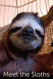 Meet the Sloths 2013