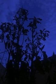 The Night