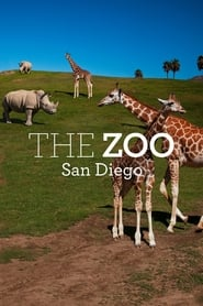 The Zoo: San Diego 2019