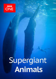 Supergiant Animals (2013)