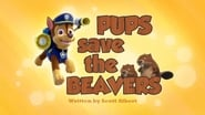 Pups Save the Beavers