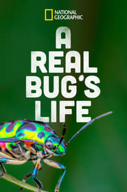 A Real Bug's Life 1970