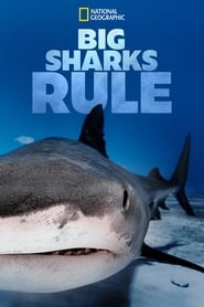 Big Sharks Rule