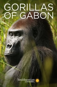 Gorillas of Gabon