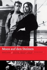 Moos auf den Steinen 1968