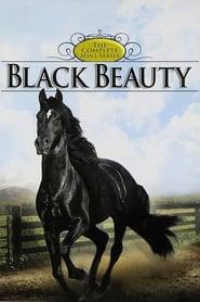 Die Abenteuer von Black Beauty