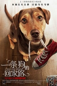 一条狗的回家路.A Dog's Way Home.2019