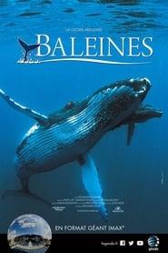 Baleines 2015