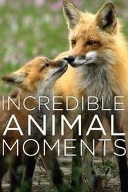 Incredible Animal Moments (2019)
