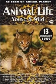 Animal Life: Young & Wild 2002
