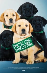 Pick of the Litter (2018) subtitrat hd in romana