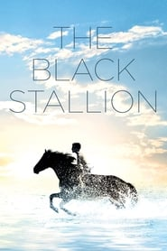 Poster for The Black Stallion