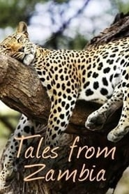 Tales from Zambia 2017