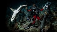 Captura de 700 Tiburones