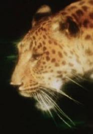Leopard movie