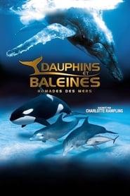 Dauphins et baleines : Nomades des mers movie