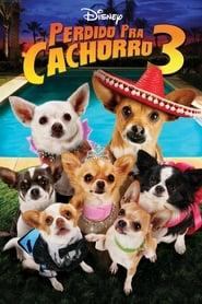 Chihuahuan från Beverly Hills 3