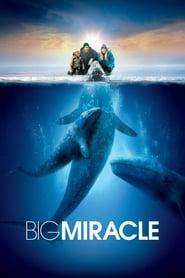 Poster Big Miracle 2012