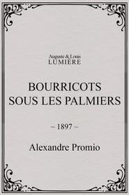 Bourricots sous les palmiers 1897