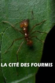 La cité des fourmis 1999