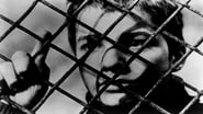 The 400 Blows  Wallpaper