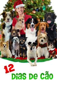 12 Dias de Cão