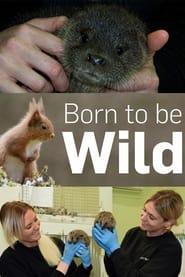 Born to Be Wild 2019