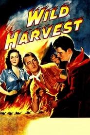 Wild Harvest 1947