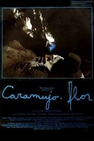 Caramujo-Flor 1988