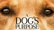 A Dog's Purpose picture