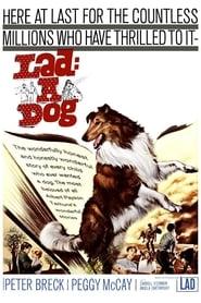 Lad: A Dog 1962