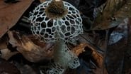 EUROPESE OMROEP | Fantastic Fungi