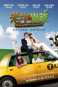 Old Cow Vs Tender Grass 2010