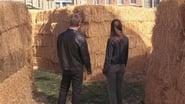 Gilmore Girls Season 7 Episode 18 : Hay Bale Maze