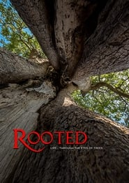 Rooted Life Through The Eyes Of Trees